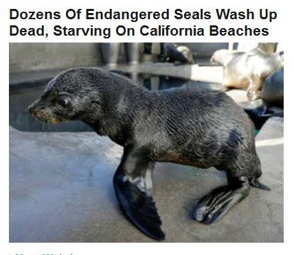 10-02-2015 FPHL 07-34 - HP WEEPS FOR SEALS