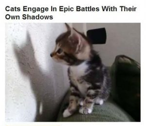 10-04-2015 FPHL 21-41 cats in battles with shadows FP