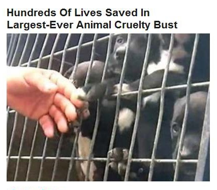 10-15-2015 FPHL 22-58 abused dogs