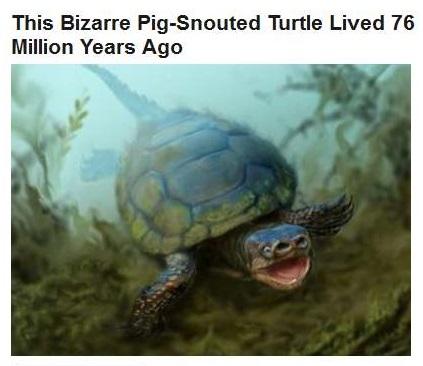 10-23-2015 FPHL 14-47 - prehistoric turtle - FP