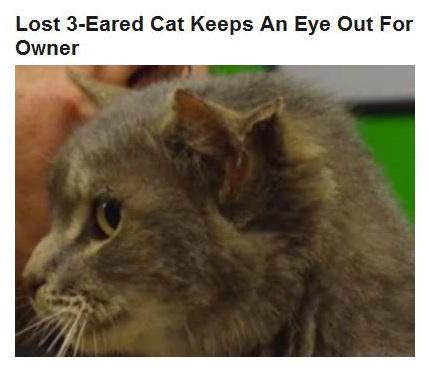 11-17-2015 FPHL 10-18 - lost 3 eared cat