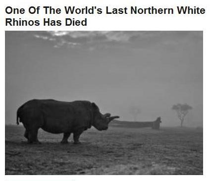 11-23-2015 FPHL 15-21 - White rhino died