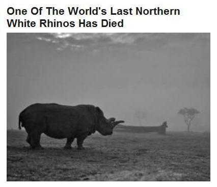 11-24-2015 WPHL 22-15 - white rhino died