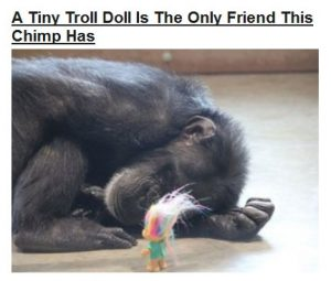 Sad-chimp